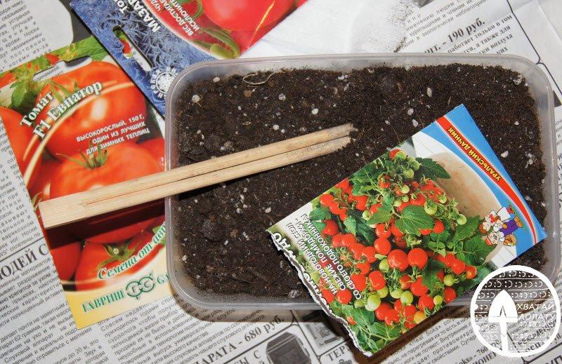 rassada pomidor vyrashchivaniye