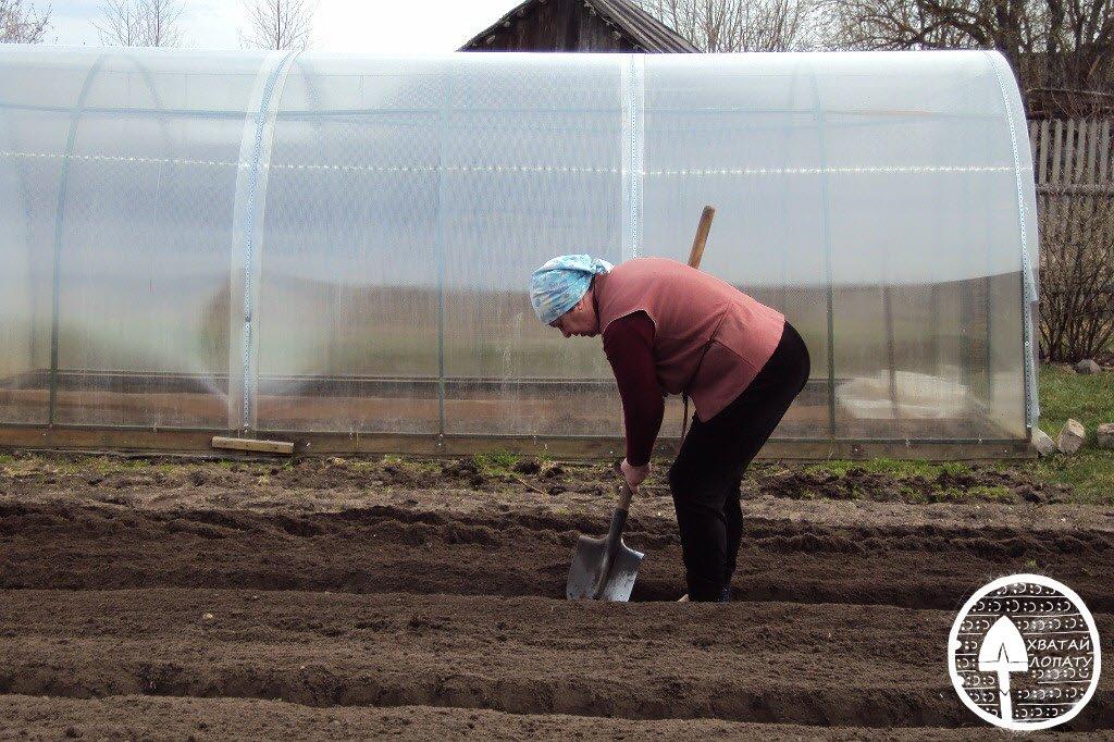 подготовка грядки под посадку лука
