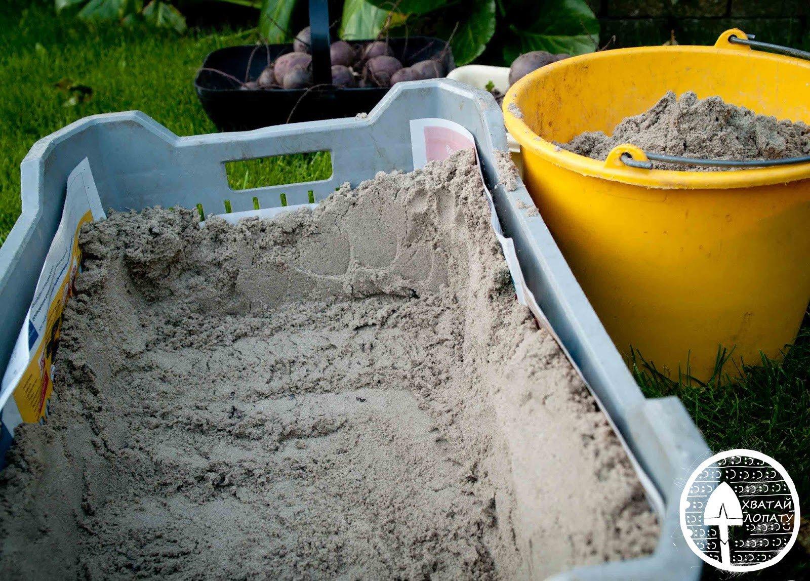хранение свеклы в песке