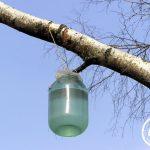 Березовый сок – польза и вред