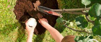 Какие плодовые деревья посадить в саду