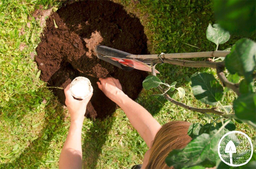 Когда в саду сажать деревья 594