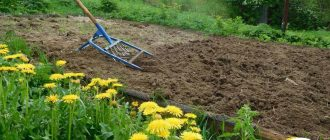 Система содержания почвы в садах