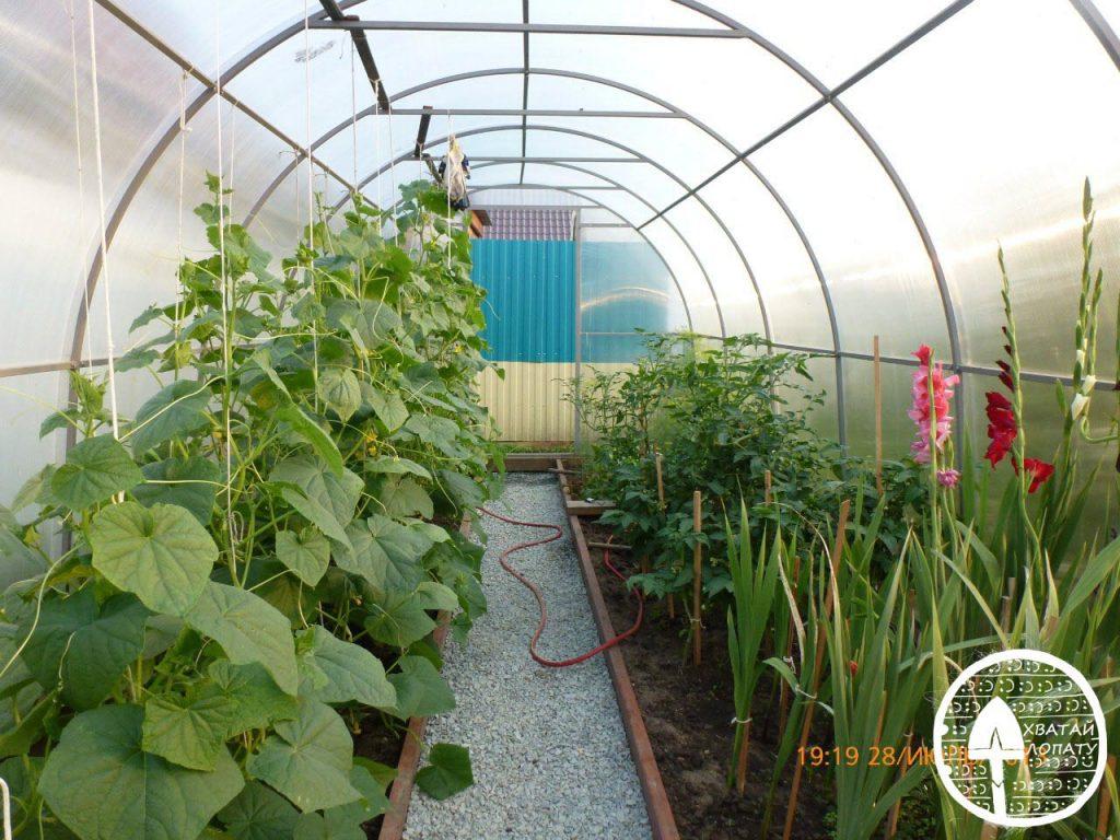 Бизнес выращивание огурцов в теплице 13